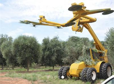 Gallard Services - Contract Olive Tree & Grove Maintenance