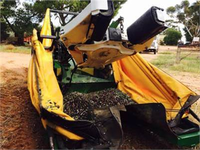 Mechanical Olive Harvesting Contractor