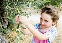 Genetic Markers in Olive Breeding to Bring Cheaper, Higher Quality Oil to Consumers