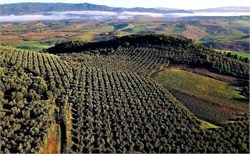 6th 'Extrascape' Recognizes Outstanding Olive Oil Landscapes