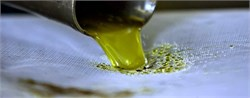 How Microorganisms Affect the Sensorial Qualities of Olive Oil