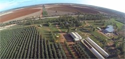 Could Drones Be the Next Big Thing for the Australian Olive Industry?