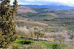 Lebanese Olive Oil: Exploring Intricacies of a Sector With Potential