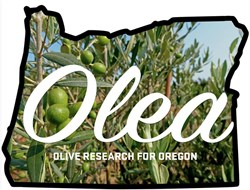 Oregon Project Aims to Promote Olive Oil Sector