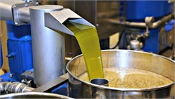 Europe's Olive Oil Exports on Record-Breaking Pace