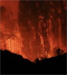 Can Olive Trees Protect From Forest Fires?
