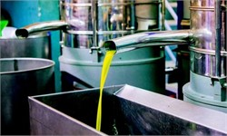 New Production Technology Improves Olive Oil Quality