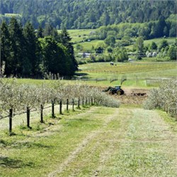 Against All Odds: The First Olive Oil From Canada
