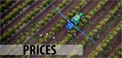 Analysis of the Situation of Olive Oil Prices in Spain: Causes, Solutions and Forecasts