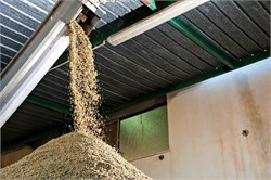 Research Examines Functional Ingredients in Olive Pomace