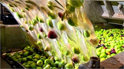 Producers in Greece Generate Electricity with Olive Mill Wastewater