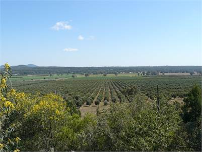 Once In A Lifetime Opportunity~ Eden Valley Olives