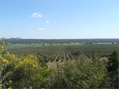 Block 2 ~ Eden Valley Olives