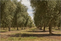 Shepparton District Olive Grove & Grazing Property